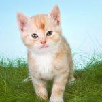 پاسخ به شبهه ی از اهلبیت بودن گربه