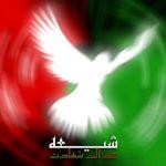 ایا امام باقر علیه السلام فرمودند شیعیان احمق یا شکاک هستند؟